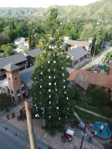 Ein Weihnachtsbaum fürs gesamte Jahr